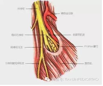 肘关节复位手法图解
