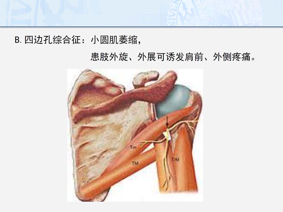 左肩膀骨骼结构图